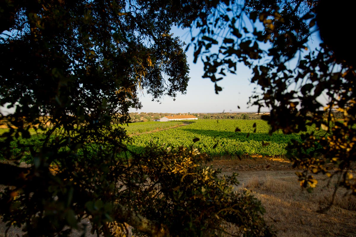 maroteira wine portugal vineyard